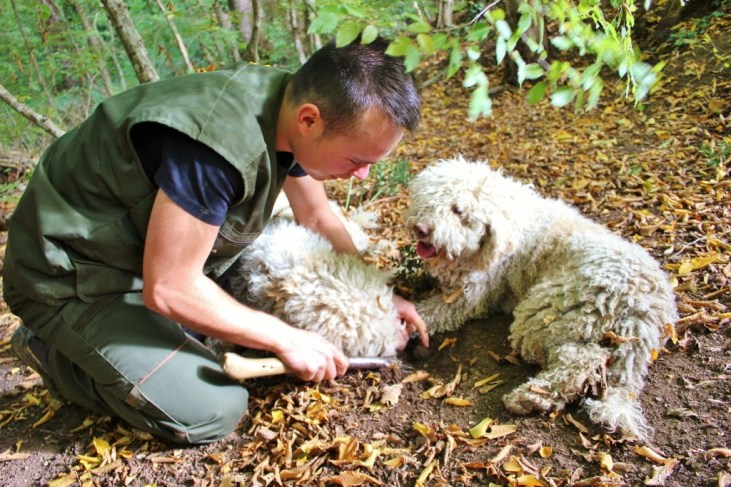 Finding truffles while truffle hunting with dogs at Karlic Tartufi in Paladini, Istria, Croatia