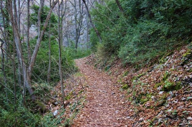 Fall leaves on hiking trail at Matka Canyon, Skopje, Macedonia