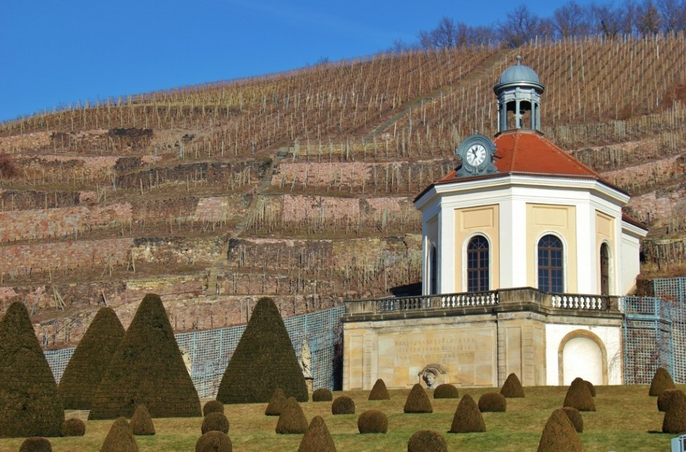 Hillside vineyards at Wackerbarth Winery in Radebeul, Germany