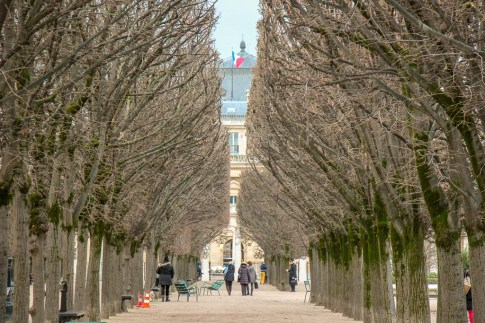 Tree-lined path in Royal Palace Gardens in Paris, France