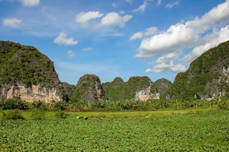 Green fields everywhere, Trang An, Ninh Binh Province, Vietnam