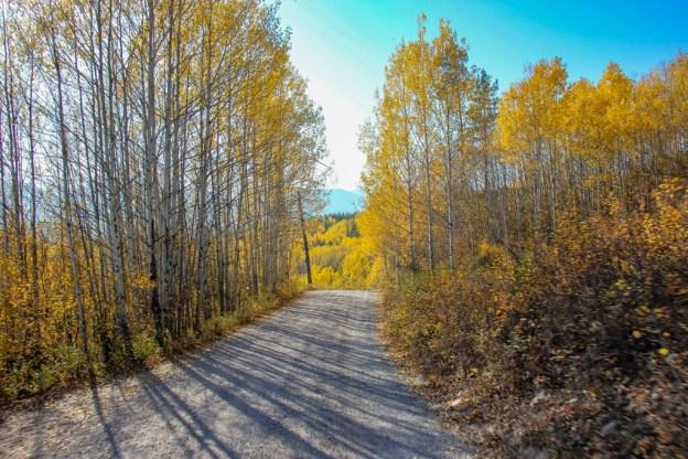 Unpaved Road to Bowman Lake, Montana Road Trip