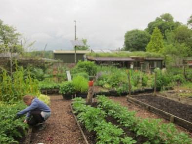 Offshoots-veg-rows-walter-siegel-build-in-background