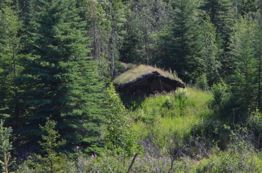 Sod roofed miner's cabin.
