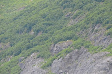 Mountain goats, look closely.