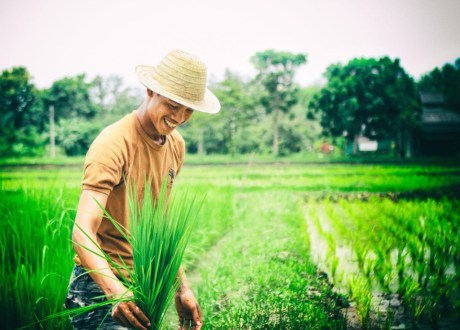 Professional Photographer Scott Lumley Takes a Field Trip to Rice Farming with We Learn Thai Chiang Mai 368