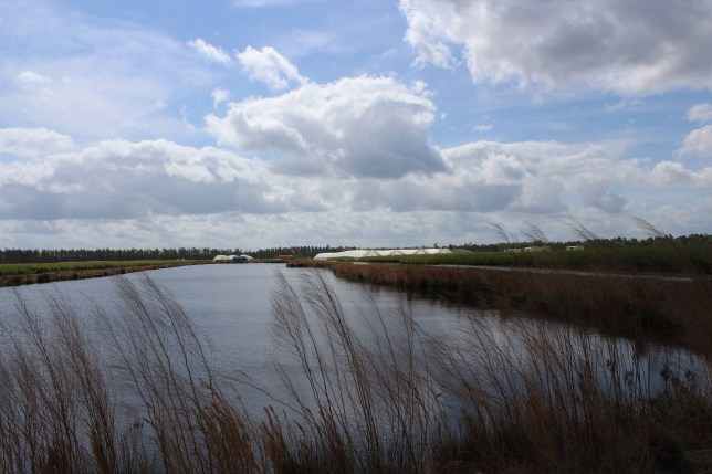 The many farm ponds are crucial for drainage and irrigation