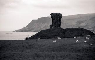 Grazing Sheep; Antrim Coast