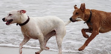 dogs-708354__180