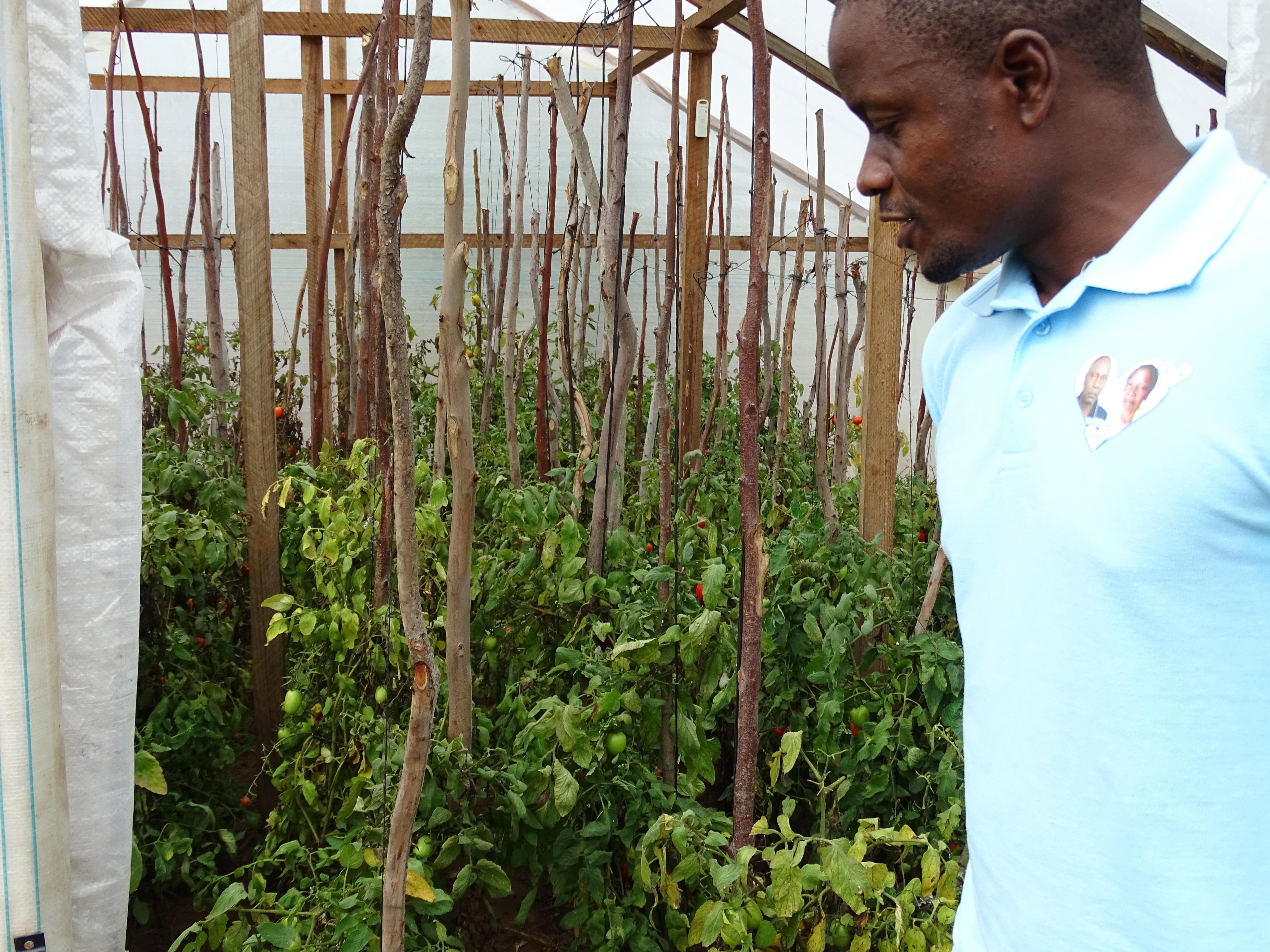 Affordable Greenhouse - World Hope International