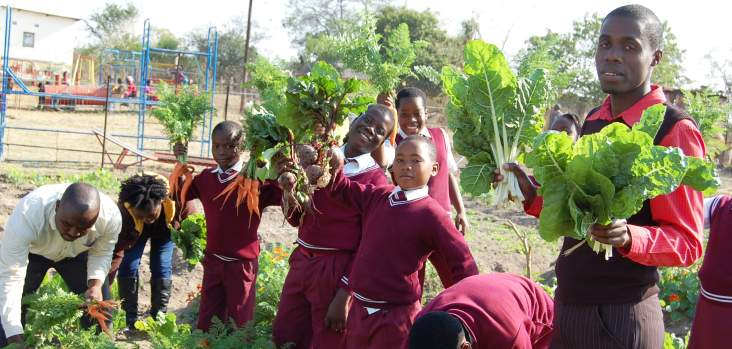 Can a garden in a box help south africans grow more food for Vegetable garden designs south africa