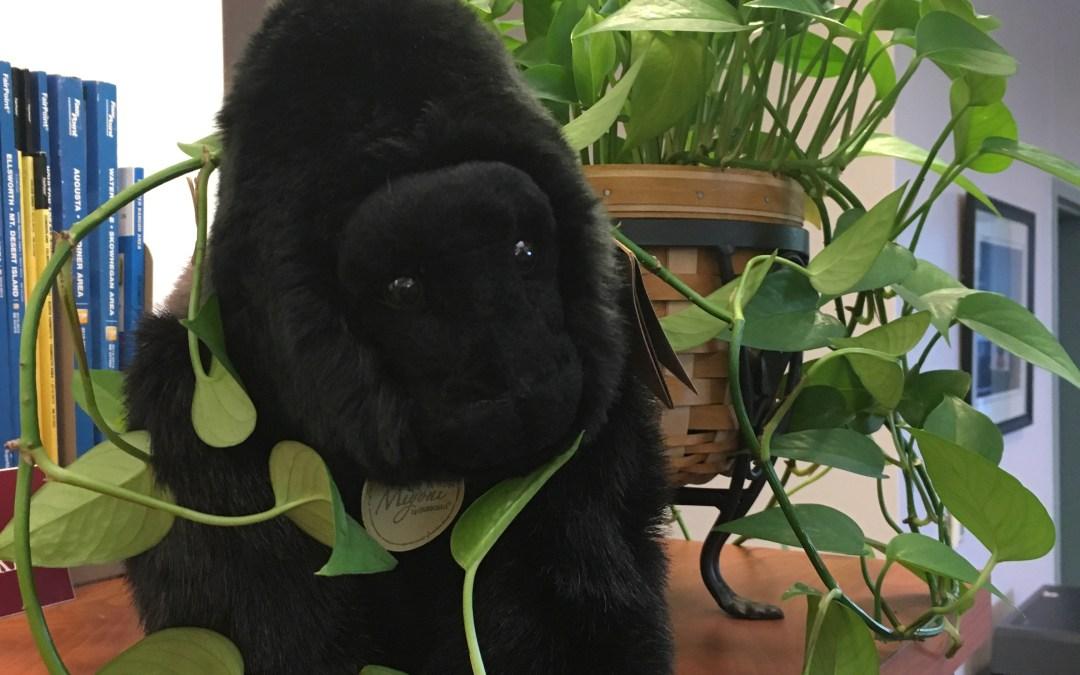 Ivan the stuffed gorilla used in One Book One School