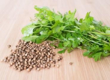Cilantro and Coriander (Seeds): Photo Credit, Fotolia