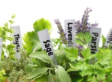 Aromatic Plant Terms: Photo Credit, Fotolia