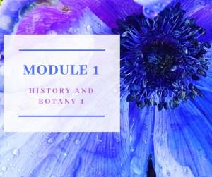 Certificate in Holistic Aromatherapy Module 1