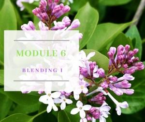 Certificate in Holistic Aromatherapy Module 6
