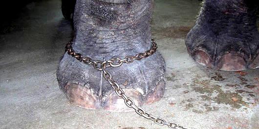 鎖に繋がれた象の話 植え付けられた固定概念が自由を奪う