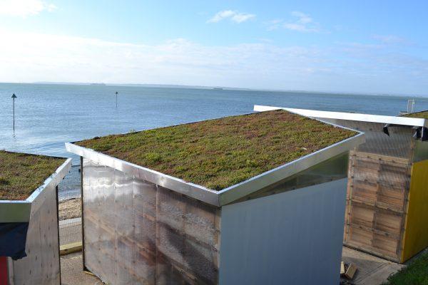 Buying Sedum Sedum Green Roof