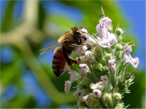 benefits of green roof - insects and wildlife