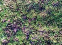 Biodiverse Mats bring colour to your green roof