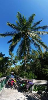 vertical-palm-panorama