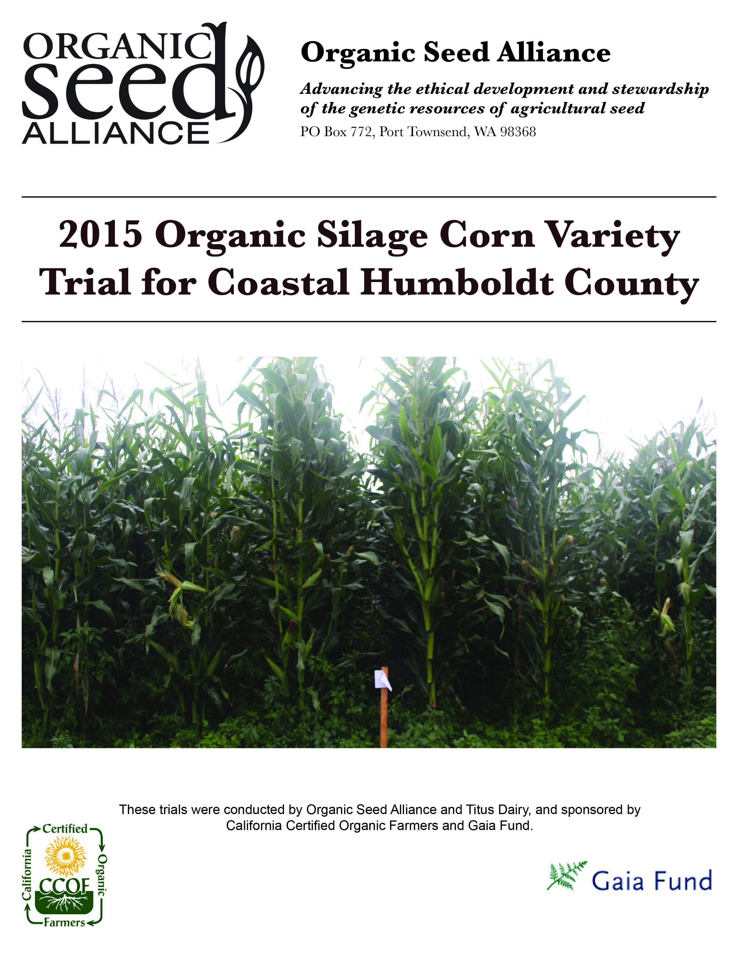 Organic Silage Corn Variety Trial For Coastal Humboldt County