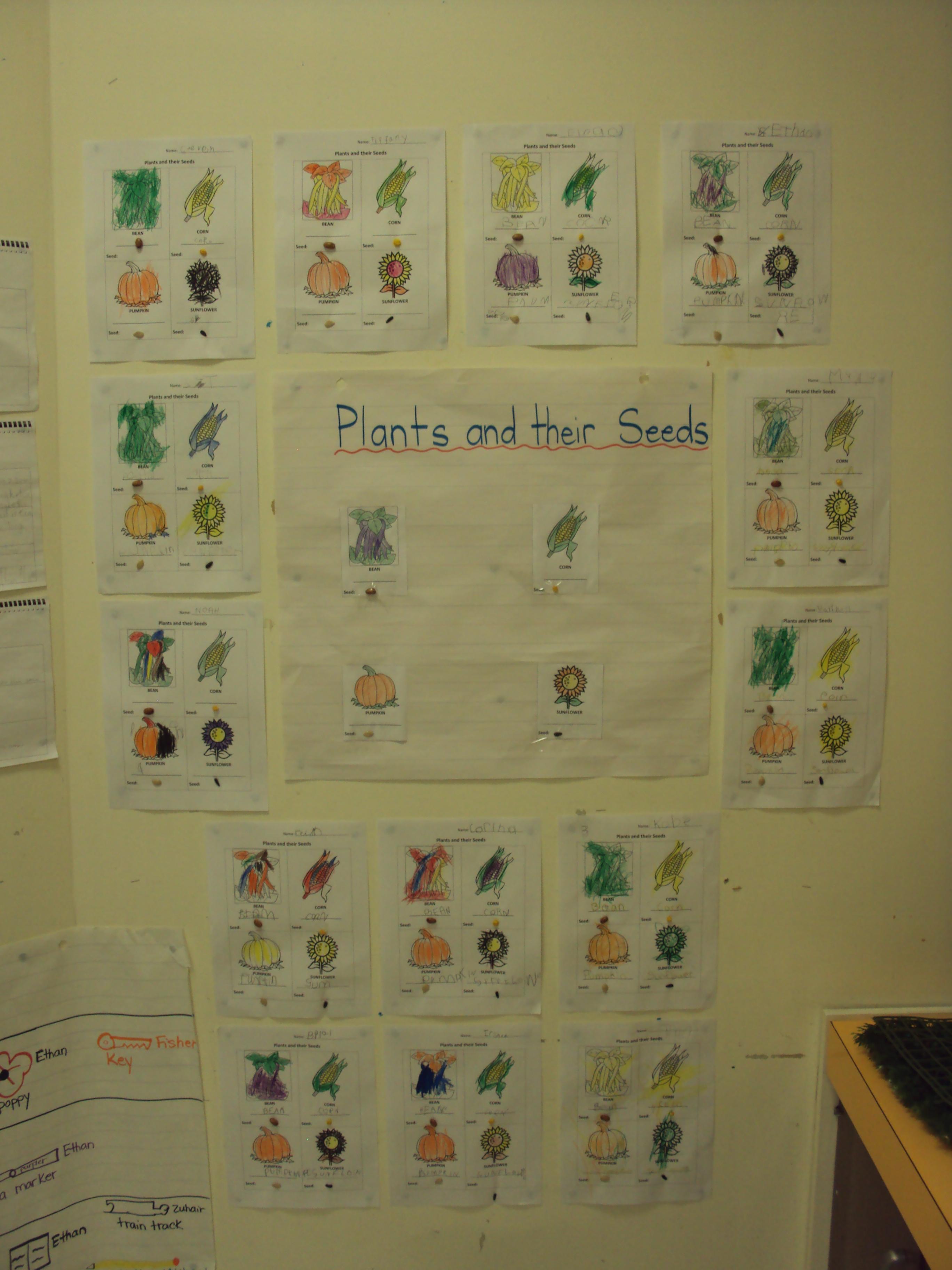 Kindergarten Seed Art