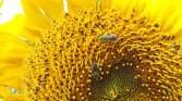 So many pollinators!