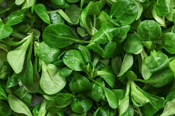 Corn Salad Mache Vegetable Seeds - Wholesome Supplies