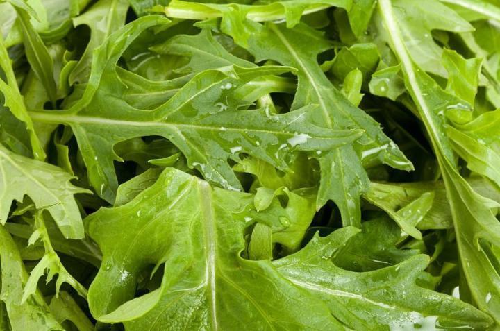 Mizuna Mustard Microgreen Seeds Bulk - Wholesome Supplies