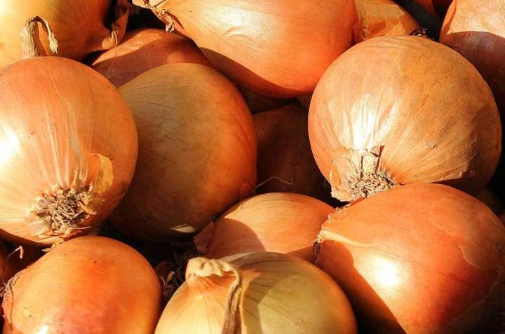 Onion Parma Yellow Globe Seeds - Wholesome Supplies