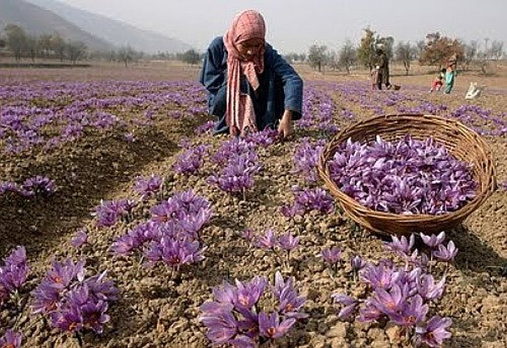 Saffron Bulbs Kesar buy online at reasonable price at ...