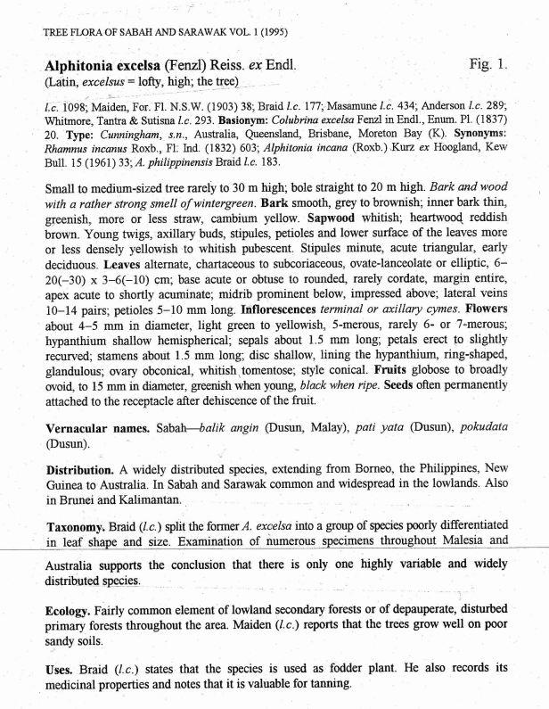 TFSS Vol. 1  Text Alphitonia .jpg