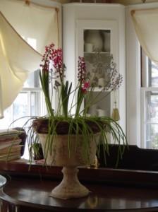 Hyacinths and muscari