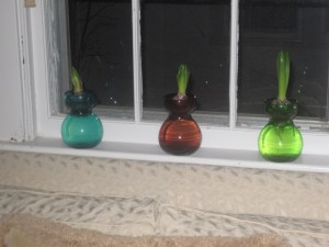 More hyacinths in vases