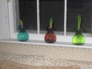 More hyacinths in vases