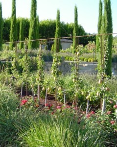 Potager of a French chateau
