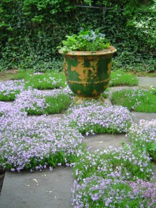 The original phlox garden.
