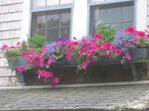 Window box in pink and blue
