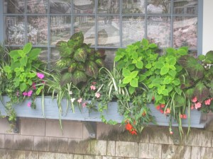 Window box in greens