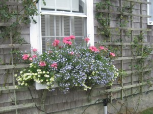 Frothy window box