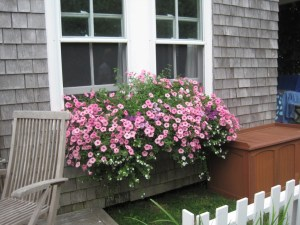 Window box in pfrothy pink