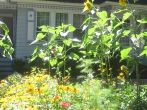 Maria's garden 2