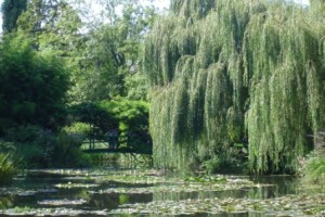 Tree Giverny