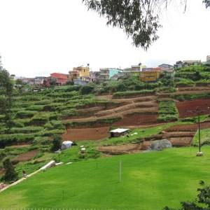 Terraced farming - Nilgris, India