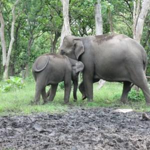 Mama with baby. Modhumalai, India
