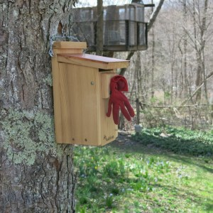 My red glove temporarily in the opening of the bluebird house - to ward off sparrows