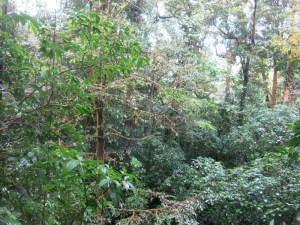 Monteverde rainforest