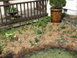 Mulched perennial bed