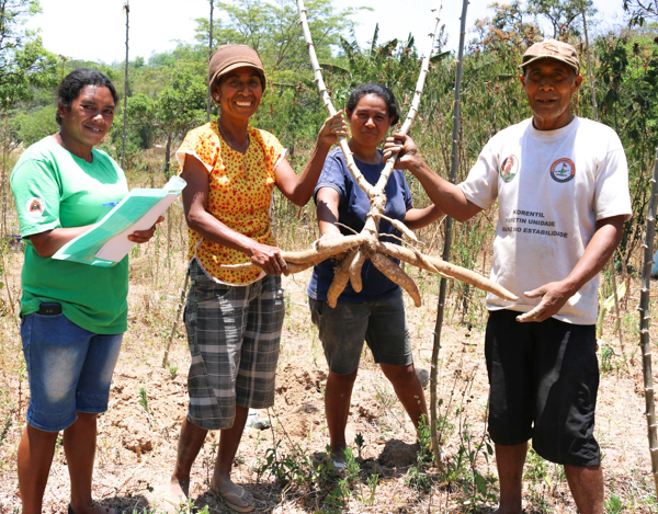 Veneranda (second from left), her daughter and husband Fortunatu show MAF-SoL Researcher Maria Martins one of their cassava crops